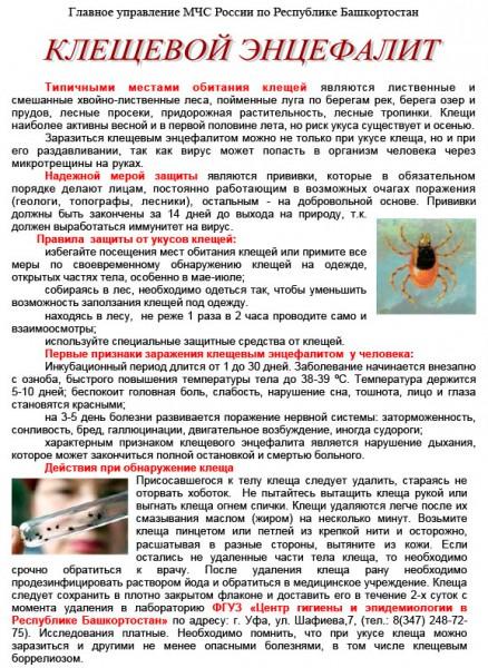 kleshhevoj-entsefalit-11.jpg